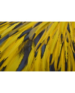 AMERICAN ROOSTER SADDLE -  BLW DYED YELLOW