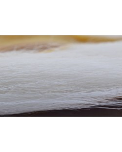 BUCKTAIL WHITE